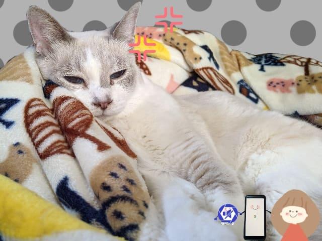 猫の迷惑そうな顔