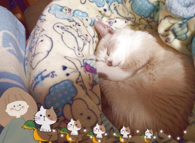 電気毛布で寝る猫